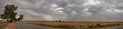 Low pressure cloud over the Coolamon-Temora Rd (i-lenticularis) Tags: panorama fe28f2 4shot ruralscene lowpressurecloud farming huginpanorama coolamontemorard