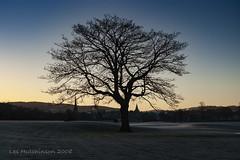 2008 12 06 - North Inch tree (LesHutchinson) Tags: northinch perth tree skeleton branches
