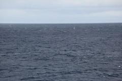 IMG_0315 (y.awanohara) Tags: humpbacks humpbackwhales whales whale southgeorgia scotiasea january2019 wildlife cetacean