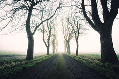 A misty morning. (A.Dissing) Tags: blue white black art light dark contrast a7 a7ii a7m2 sony anders dissing masterpiece super detail fantastic good positive photo pixel mm creative beautiful color composition moment europe artistic other danish denmark danmark different exposure enjoy young unique weather scene awesome dope angle perfect perspective interesting flickr explore unusual adventure gedved yellow melancholic melancholy magic multicolor magical misty park outdoor outside amazing scape dirty morning golden gold hope