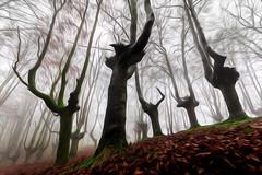 URKIOLA OLEO ART 100 (juan luis olaeta) Tags: paisajes landscape forest basoa bosque hayedo pagoa oleo art photoshop lightroom canon urkiola basquecountry fog foggy laiñoa nieblas