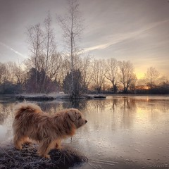 Here comes the Sun (M a r i k o) Tags: iphone iphonex iphoneography iphonephotography mobile mobilephotography mariko square dog hund norfolkterrier lake frozen morning sunrise sun trees notzing notzingerweiher erding bayern bavaria germany snapseed camera