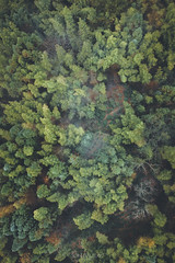 Bamboo Forest (songallery) Tags: china travel trip huangshan anhui chn 安徽 aerial aerialgraphy bamboo chinese cloudy directlyabove dji drone forest green m2pb mavic2pro tree 塔川 木坑竹海 黟县