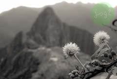 Machu Picchu, Provincia de Urubamba - Distrito de Machupicchu (Región Cusco / Perú) (jsg²) Tags: perú américadelsur sudamérica suramérica postalesdelmusiú travel viajes fotosjsg2 johnnygomes fotografíasjohnnygomes jsg2 inca quechua machupicchu provinciadeurubamba