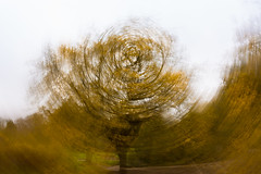 """Yellowed Impressions (""""The Wanderer's Eye Photography"""") Tags: design 2019 canoneosdslr canoneosrebelxsi digitalphotography england icm rubenalexander susanalexander thewandererseyephotography uk abstract art artistic autumn backdrop background beautiful blur blurred bright cameramovement circle circular color colorful countryside creative distorted dizzy forest graphic imagination impression impressionist impressionistic intentional intentionalcameramovement kewgardens kewroyalbotanicalgardens landscape leaves motion movement painterly painting panning pattern richmond rotate rotation slowexposure soft spin sunlight swirl texture trees twirl vision wallpaper wood woods"""