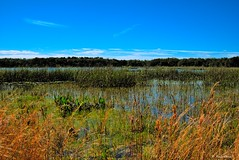 Layers of Color (surfcaster9) Tags: blue sky marsh grass water wetland outdoors nature panasonic lumixg7