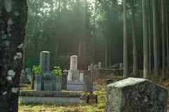 First Sunlight - Japan (willmann_f) Tags: graveyard cemetery morning sun daylight natural nature trees ambience japan travel fullframe sony alpha