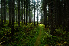 Into the forest (dawolf-) Tags: forest nature wood green lush hiking outdoors trees path austria canon undergrowth magic