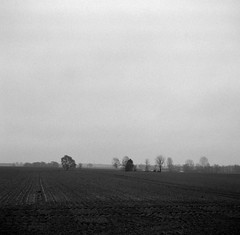 Wasteland (Rosenthal Photography) Tags: fomapan400 dezember epsonv800 landschaft mittelformat ff120 januar analog schwarzweiss asa400 rodinal15021°c11min winter zeissikonnettar51816 20190201 wasteland desolation landscape fields trees january mood blackandwhite zeiss ikon nettar anastigmat novar 75mm f45 fomapan rodinal 150 epson v800