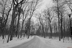 Black and white - Winter - Parc du Bois-de-Coulonge,  Québec - Canada - 8811 (rivai56) Tags: silleryquébecqcsilleryquébec qc blackandwhite winter parcduboisdecoulonge québec canada 8811 parc de sillery en noir et blanc noiretblanc