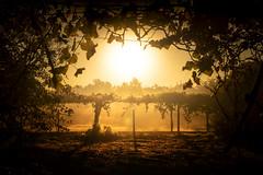 Solláns (Noel F.) Tags: sony a7r a7rii ii fe 24105 galiza galicia teo sollans mencer sunrise