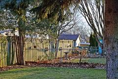 Late Light (Sue90ca Spring Has Sprung...No Grass, No Flowers) Tags: canon 6d backyard