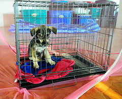 ,, Very Sick Puppy ,, (Jon in Thailand) Tags: littledoglaughedstories