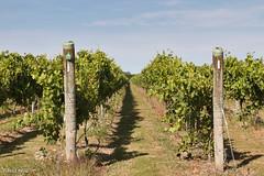 190128 094915 (Vibeke Friis) Tags: martinborough wellingtonregion newzealand nz