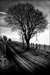 Standing Tall (Missy Jussy) Tags: standingtall tree lane road footpath walk fence fields sky outdoor outside countryside farmland fantastic50mm mono monochrome blackwhite bw blackandwhite snow winter february 2019 light sunlight 50mm ef50mmf18ll ef50mm canon50mm canon5dmarkll canon5d canoneos5dmarkii canon landscape lancashire land rochdale northwest england uk greatbritian