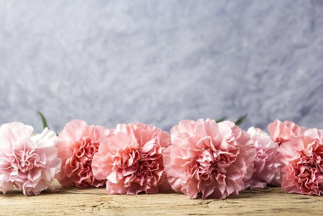 Обои цветы, лепестки, розовые, wood, pink, flowers, beautiful, гвоздики, carnation картинки на рабочий стол, раздел цветы - скачать