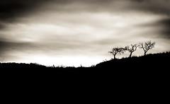 Árboles solitarios. (Ricardo Pallejá) Tags: árbol tree landscape lightroom luces sombras monocromático monocromo nikon d500 shades blancoynegro bw blackandwhite silueta clave priorat