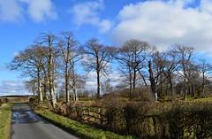 Country Lane, Ayrshire, Scotland. (Phineas Redux) Tags: countrylaneayrshirescotland countrylanes scottishlanes scottishlandscapes scottishscenery ayrshirescotland scotland