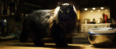 Panorama of Our Cat Strack (nikon_tori) Tags: strack cat black kitty cute counter bokeh depth field