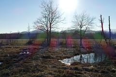 Marais de Lavours (Ain - France) (boutigny) Tags: marais swamp valromey séran ain lavours culoz eau mare tourbe
