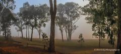 Before sunrise - Lake Eildon, Victoria (Peter.Stokes) Tags: australia australian colour landscape nature outdoors photo photography lakeeildon lake misty mist trees
