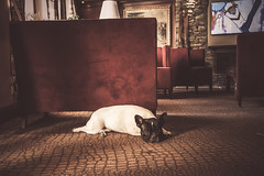 DSCF5040.jpg (Caasp1) Tags: dog france chamonix hotelitaly inside livingroom fujifilm fujifilmxt2