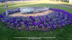 Crocuses flowering around 'Spud MacPat Face' boat on Huntingdon Ring Road 22nd February 2019 001 (D@viD_2.011) Tags: crocuses flowering around spud macpat face boat huntingdon ring road 22nd february 2019