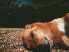 doggy (vhickey25479) Tags: dogs