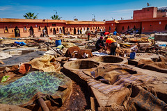 The Tannery in Marrakesh (rtenny) Tags: marrakesh morocco animal archaeology architecture beach blue building calamity cattle city cow daylight group home house human industry landscape mammal nature outdoor outdoors people person seashore sky soil town travel waste water wood