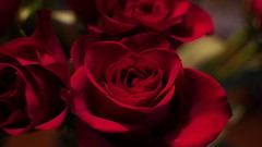 76/365 Heartfelt Roses (OhWowMan) Tags: 365the2019edition 3652019 day76365 17mar19 ohwowman nikon d3300 acdseepro9 shadow shadows rose roses flower flowers red heart love luv affection romance