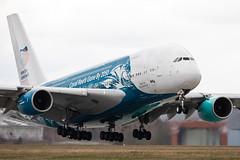 Airbus A380-841 (rengawfalo) Tags: airbusa380841 a380 9hmip airbus a380841 hiflymalta hifly savethecoralreefs drs dresden eddc efw flugzeug flughafen flieger airbus380 plane spotter spotting airport aviation airplane aircraft jet