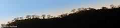 Ridge (asheshr) Tags: incredibleindia jhalanaleopardsafari landscape landscapepanorama landscapephotography nikkon200500mm nikkond7200 rajasthan ridge treeline sunset backlit backlittrees beautifulsunset sunsetonthehills silhouette trees
