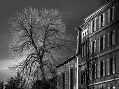 black and white (trebor.raw) Tags: archiurbanisme immeublebatiment nature village arbre noiretblanc monochrome valensole provence hdr