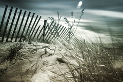 Week 8 Composition: Leading Lines (arlene sopranzetti) Tags: new jersey shore beach long exposure infrared dogwood2019