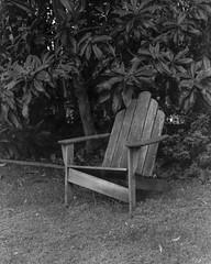 Loquat tree lawn chair (ADMurr) Tags: la broken chair loquat toyo 135mm 4x5 expired kodak tmax dad908