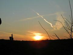 Sun, clouds & cat (elisabeth.mcghee) Tags: sunset sonnenuntergang sun clouds wolken himmel sky sonne katze cat female sissy oberpfalz unterbibrach upper palatinate äste branches