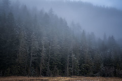 March of the Ents (writing with light 2422 (Not Pro)) Tags: marchoftheents washingtonstate trees forest fog mist mrnp mountrainiernationalpark longmire richborder landscape sonya7 riii variotessartfe42470 pacificnorthwest