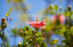 r. b. (solterrae) Tags: ifttt 500px blooming petal flower floral botanical head blossom flora bud spring bloom shrub red summer plant closeup pink flowers white beauty natural color garden beautiful