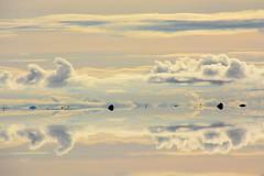 lever de soleil Salar d'Uyuni Bolivie/ Bolivia_4160 (ichauvel) Tags: salarduyuni uyuni bolivie bolivia amériquedusud southamerica amériquelatine paysage landscape beautédelanature beautyofnature sel salt voyage travel 4x4 véhiculetoutterrain gen s personnages janvier january eau water sunrise leverdesoleil ciel nuages sky clouds voitures cars reflets refelctions lac lake getty
