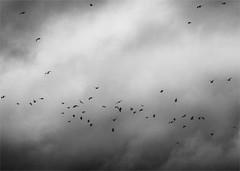 The Birds (garethedwards36) Tags: lumix panasonic affinity affinityphoto atmosphere monochrome sky clouds weather gulls uk birds