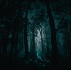 Deep in the Dark Woods (Flurdeh) Tags: redemption red dead woods trees gaming games screenshot landscape dark