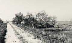 Iph8221 (gzammarchi) Tags: italia paesaggio natura ravenna santalberto passoprimaro parcodeltadelpo voltascirocco strada stradabianca casa albero lago bn