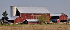 Working farm with old red buildings - Milton, Halton Region, Ontario. (edk7) Tags: nikond300 sigma50500mm1463apodghsmex edk7 2009 canada ontario haltonregion milton farm barn concretesilo disused decapitated old 19thc decrepit rough dilapidated architecture building oldstructure country countryside rural tree fence decaying boardandbatten grass sky manurepile crops animal livestock bovine cow cattle door window rooflinevent lightningrod rust rusty crusty shed tractor rotobale corrugated workingfarm oldredbuilding roof field