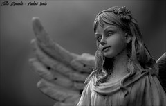 Little Angel (darkangel1910) Tags: angel engel sennefriedhof friedhof fotografie friedhöfe forthelovetothedetail flügel wings love liebe leidenschaft passion photo pictures pastdays photography liebezurfotografie liebezumdetail stille momente schwarzundweis silent moments morte memories magical gothic graveyard grabmal grabstätte gedenksteine grabmäler gravestones germany deutschland gottesacker grab grief darkness detail dunkel cemeteries cemetery cimetière cimitero ausdemherzenfotografiert arte art angels amore erinnerung europa europe emotional erinnerungenfesthalten engelsgesicht blackandwhite begraafplaats bildhauerkunst kunst kunstwerk l