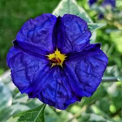 flor azul (Jakza) Tags: flor quadrada azul