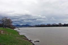 in Bonn-Beuel am Rhein (mama knipst!) Tags: bonnbeuel rhein deutschland germany allemagne märz hochwasser