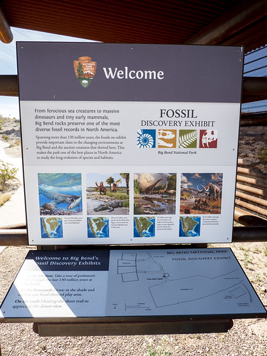 Fossil Discovery Exhibit