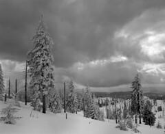 Dark clouds over the Bavarian Forest (str.ainer) Tags: wolken clouds baum bäume trees winter rachel nationalparkbayerischerwald nationalpark bayerischerwald bavarianforest mamiya rb67 sekor sekor65mm ilford fp4 adox fx39 hugin gimp film