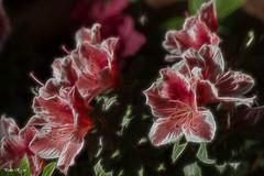 Días de Abril (pedroramfra91) Tags: exteriores outdoors jardín garden flores flowers primavera spring rojo red colores colors
