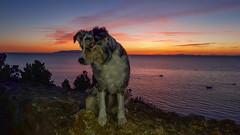 Tramonto a Talamone (adzamba) Tags: 2018 talamone toscana italy ita belvederedellaroccaaldobrandesca mare tramonto aussie australian australianshepherd cane canepastore dog dogs pastore pet pets shepherd